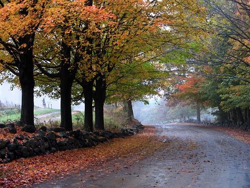 275076144 47a24a6308 - Beautiful Rain On Street