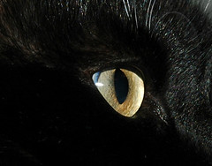 Kitty's Beautiful Eye (Shawn's Kitty (Busy Healing!)) Tags: eye cat kitty tuxedo