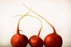Turnips, another family (Vlundur Jnsson) Tags: red white vegetable strings highkey root turnip antennas hairs taproot