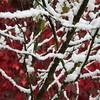 First Snow - IMG_1614 (Andreas Helke) Tags: schnee winter red snow nature canon germany square deutschland europa europe iso400 natur 55mm utata fav f56 dslr firstsnow canoneos350d squared cherrytree creidlitz twa canon1855 quadrat 160 fav2 kirschbaum 1106 wilderwein candreashelke scoreme worldsfavorite canonefs1855mmf3556 score3570 haslargesize 20061114341 20061116412 donothide oldstileoriginalsecret fav2andmore popularold