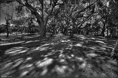 Main Street (Bravo_Kilo) Tags: camping oak woods canon20d cumberlandisland hdr oaktrees canonefs1022mm canon1022 bwhdr cumberlandislandnationalseashore colemanave