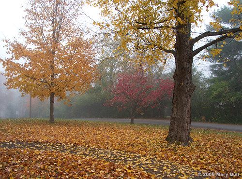 Maple_Tree_on_a_Foggy_Morn_treatment_by_Joe_Russo_110106-1