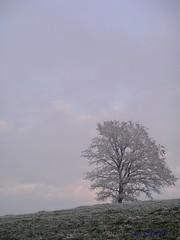 The Frozen Tree (Itzl  ~~~) Tags: winter sky tree 2004 nature landscape switzerland explore elegance theone interestingness417 i500 optio550 grasswil itzl