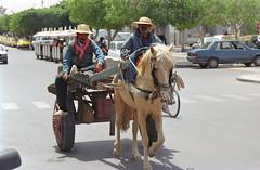 Carro (bizzo_65) Tags: horse tunisia djerba carro cart carrozza cavallo calesse