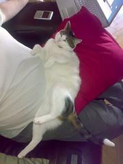 31102006415.jpg (judey) Tags: cat twinkle