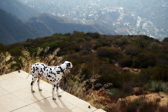 Accomplishment (Muzzlehatch) Tags: dog mountain echo olympus 2006 cooper mapprinclude dalmatian e500 zd 40150mm muzzlehatch