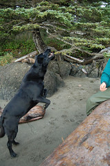 01 185 (R.S. Graham) Tags: ocean longexposure travel camping blackandwhite bw beach landscape waves nightshot britishcolumbia trails surfing vancouverisland westcoast hikingtrails provincialparks raftcove