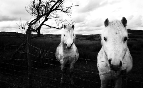 Who's gonna ride your (black and white) wild horses