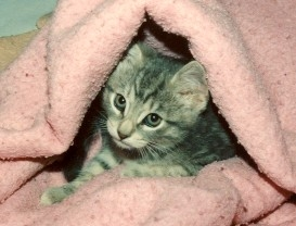 Dusty - baby picture