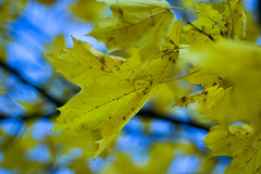 The Day We Met (Elinesca) Tags: autumn fall leaf energy foliage savedbythedeltemeuncensoredgroup villes pcard macromag