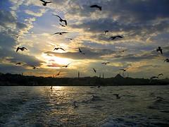 to Üsküdar (H e r m e s) Tags: sunset sea sky beautiful turkey great istanbul