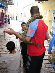 "big freaking snake • <a style=""font-size:0.8em;"" href=""http://www.flickr.com/photos/70272381@N00/304630825/"" target=""_blank"">View on Flickr</a>"