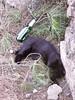 bisboccia felina (rosa_pedra) Tags: beer cat birra gatto nero blak gattideroma mcb1419