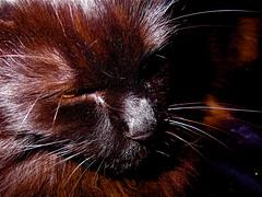Meranda In Deep Thought  (mightyquinninwky) Tags: cat kitten fuzzy mygirl  meranda  abigfave bestofformyspacestation