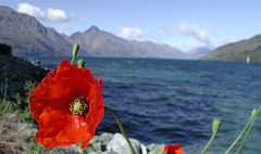 Queenstown New Zealand 0035