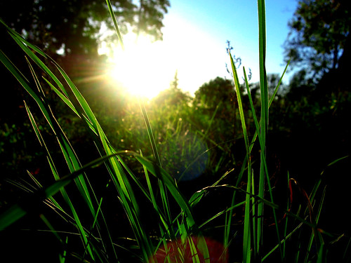 Grass in the sun