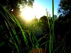 Grass in the sun (darkpatator) Tags: trip travel blue light sunset sun macro green colors grass europe peace close sweden stockholm north closer naturesfinest crapaud glim yelloow sueden darkpatator ithinkthisisart virela gardela virela2 virela3 virela4 virela5 virela6 virela7 virela8 virela9 virela10