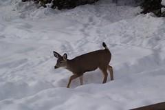 snow birdfeeder deer