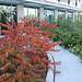 photograph of the reading garden