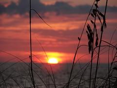 Sunset at Blind Pass (StGrundy) Tags: ocean sunset sky orange usa sun seascape black beach gulfofmexico nature water colors silhouette yellow clouds tramonto sonnenuntergang florida sony horizon prdosol sanibel sinking seaoats captiva puestadelsol coucherdusoleil blindpass dsch2 bestnaturetnc06 artistsoftheyear superperfectphotographer oceansofwondercontest