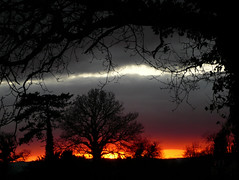 Same Place, Different Day, Another Sunset (czd72) Tags: uk trees sunset sky cold clouds silhouettes windy devon exeter wintersun churchhill pinhoe narcsasg anawesomeshot aplusphoto unature unaturefav