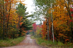 The road to nowhere (Lida Rose) Tags: autumn color colour fall topf25 adirondacks upstatenewyork tughill northcountry lewiscountyny lidarose northernnewyorkstate texasroad specnature gtaggroup abigfave aspenhollowtrucktrail beartownroad