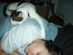 DSCN0477.JPG (judey) Tags: sleeping cat twinkle jude