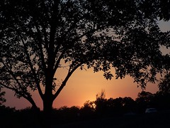 ...But, There is This... (Sparky2*) Tags: sunset tree evening poem garn ras