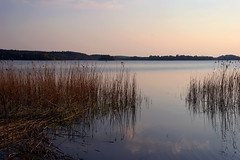 silence of silence (Sabinche) Tags: lake nature germany bravo brandenburg uckermark sabinche specnature abigfave