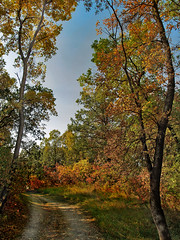 Autumn Trail (Paul Linton) Tags: park autumn trees canada fall leaves forest la winnipeg manitoba barriere labarriere abigfave
