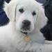 子犬:Ditte 2 months