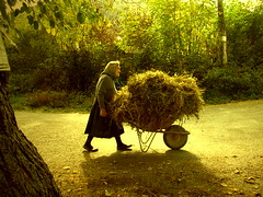 Haystack Woman (Aleksandra Radonic) Tags: street autumn portrait people woman nature forest work village carriage extreme serbia streetphotography east oldlady hay balkans cart tradition eastern wheelbarrow customs seno stog hardworking ethno kolica oldladyintheforest extremelife kravljidovillage