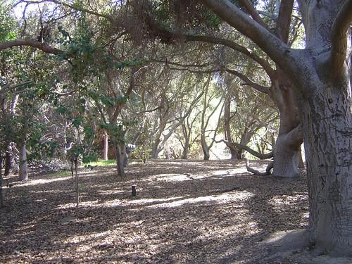 El Dorado Park - Oak woodland