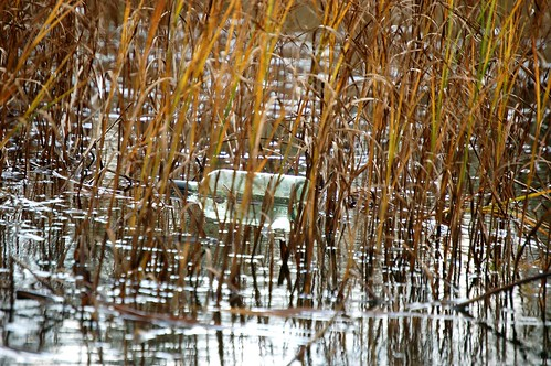 una botella de vidrio, con un papel enrollado dentro, flotando de lado entre plantas acuáticas