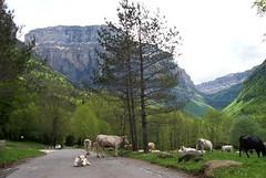 Ordesa Huesca Aragon España www.pirineos.com (InfoPirineo Pirineos.com) Tags: españa huesca aragon ordesa pirineo wwwpirineoscom