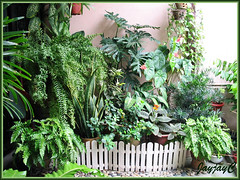 Mostly foliage plants, including Fishtail Fern, at our garden porch in October 2006