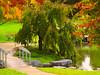 One corner of Eden? (Drawings Of Light - Paul) Tags: park bridge trees nature water olympus zuiko e500 zd awesomenature outdoorbeauty favoritegarden gordonmooreparkaltonillinois