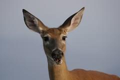 Sorry (slow guns) Tags: animalkingdomelite