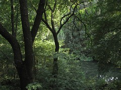 forest ( patric shaw) Tags: green nature canon magical enchantedforest patricshaw patricshaw2007