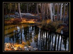 donner pass pond (MistyDaze) Tags: california trees reflection pond fallcolor explore donnerpass interestingness14 123nature charleneburge specland 1on1landscapes 1on1nature stormygirl 123faves 123landscapes yellowstoneloons nov192006 highestposition14onsundaynovember192006