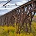 Rail Road Bridge over St. Croix River - by Jim