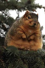 Varför blir jag inte smal undrar många trots att de äter för mycket