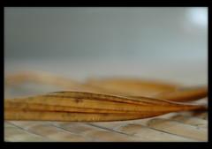 DoF pleasure (Yorick...) Tags: abstract leave texture dof d70 bokeh bamboo impermanence yorick 50mmf18d renaudvince