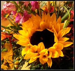Sunflower-001