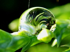 one single drop (michaelab311) Tags: macro reflection green nature topf25 beautiful catchycolors amazing fantastic colorful 500v20f greenisbeautiful natur pflanzen refraction raindrops abstructure minimalism waterdrops tropfen 1000views iloveit lessismore helluva doyouseewhatisee amazingnature views1000 lightsshadow awesomenature theworldthroughmyeyes abigfave shieldofexcellence helluvashot 30faves30comments300views artsofseeing myfavrouriteshot superaplus aplusphoto flickrjob 6favesand100views diamondclassphotographer flickrdiamond
