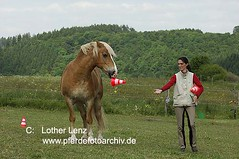 _LE12714 (Lothar Lenz) Tags: horse caballo cheval cavallo cavalo pferd hest equus paard haflinger hst hestur konj hobu zirgs lotharlenz klickertraining
