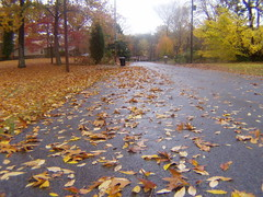 (joelwillingham) Tags: road wet leaves asphalt