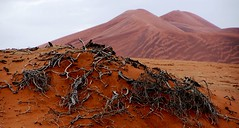 Sossusvlei (geoftheref) Tags: africa travel de landscape la interestingness interesting sand flickr desert south dune paisaje paisagem il safari afrika paysage landschaft namibia paesaggio landschap sossusvlei  frica namibie lafrique namibi  geoftheref nambia dellafrica  afrikasafari