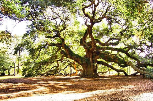 South-Carolina-angel-oak