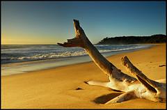 Split Solitary Beach (Leggeypics) Tags: australia nsw beaches coffsharbour leggeypics auselite